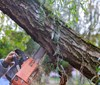 Stromy trápí suché větve, je nutný zásah arboristů
