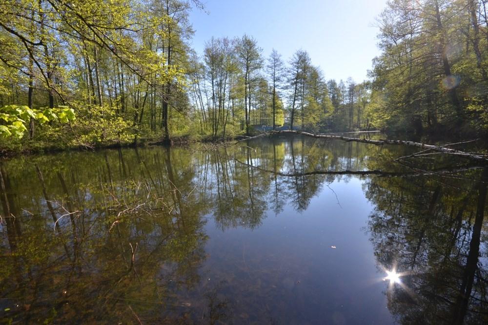 Očistnou kúrou procházel v posledním roce a půl rybník v bohumínském přírodním areálu Gliňoč.