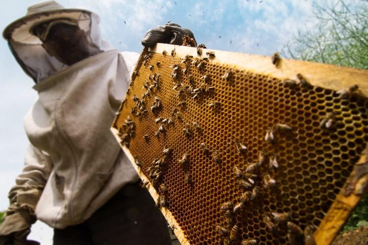 Olomoucký kraj opět podpoří včelaře