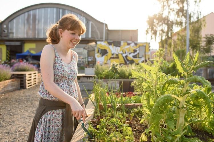 Vypěstujte si vlastní zeleninu v centru Plzně