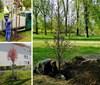 S jarem přichází ve Frýdku-Místku výsadba stromů