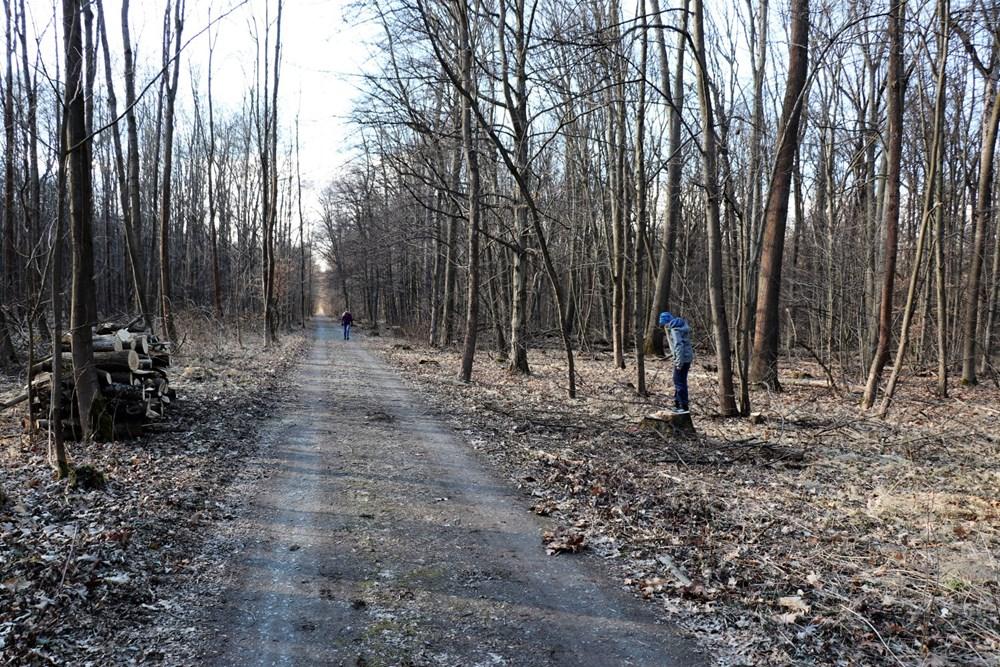 Město Přerov je vlastníkem lesního hospodářského celku – Národní přírodní rezervace Žebračka o výměře 216,90 hektarů.