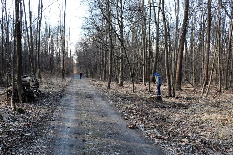Nemocné stromy v útrobách Žebračky zůstávají na místě