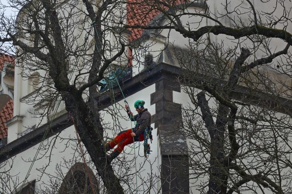 Ošetření památných jírovců v Táboře.