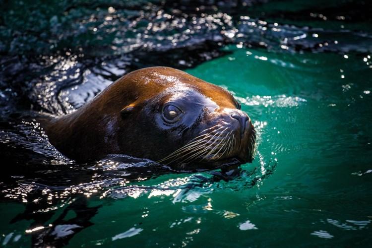 Zoo Liberec láká návštěvníky na každodenní komentované prohlídky