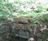 Detektor kovů odhalil granát