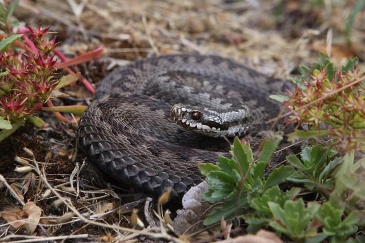 Zoo Praha představuje naše hady. Není se jich proč bát