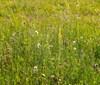 Rozkvetlá rezervace divokých koní. Botanický výzkum zjistil přes sto kvetoucích druhů za pouhé dva týdny