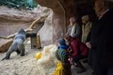 Zoo Praha slavnostně zahájila stavbu nového pavilonu goril