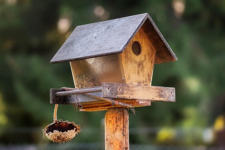 Víte, že v současné době je ptáky zapotřebí přikrmovat celoročně?