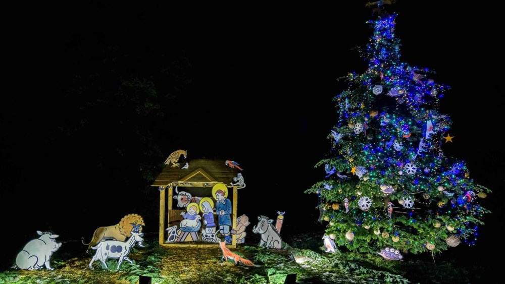 Popis: Vánoční strom v Zoo Praha se rozsvítí v neděli, a to na Veselovského louce, naproti guerézám pláštíkovým v dolní části zoo. Přítomni budou i vzácní hosté Ivan Trojan a Jiří Strach.