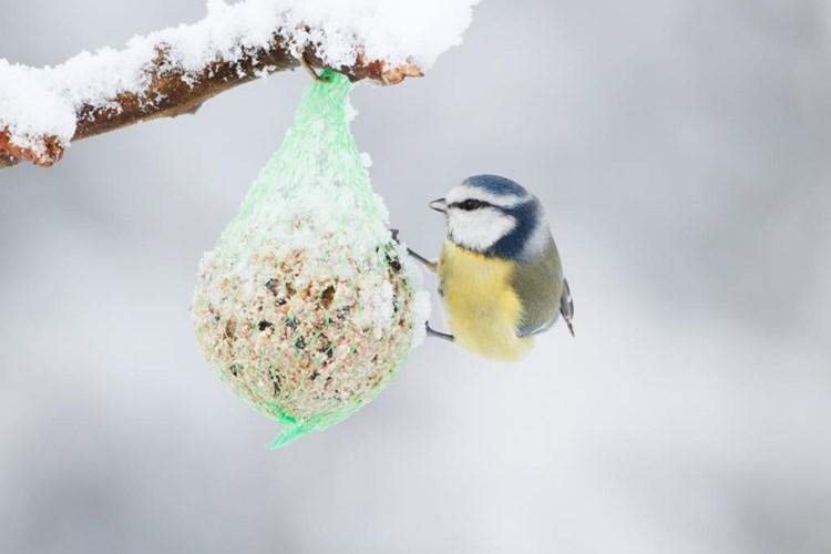 Jak správně přikrmovat ptáky? Výstava v trojské botanické zahradě poradí všem milovníkům přírody