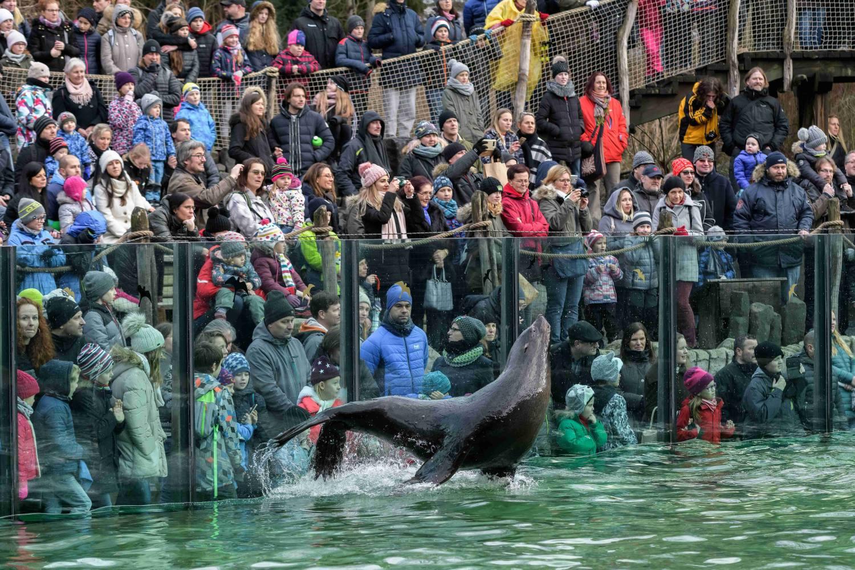 Vánoční svátky v Zoo Praha i letos proběhnou ve znamení bohaté nadílky