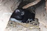 Ústecká zoo se pyšní dvěma novými přírůstky u tučňáků brýlových