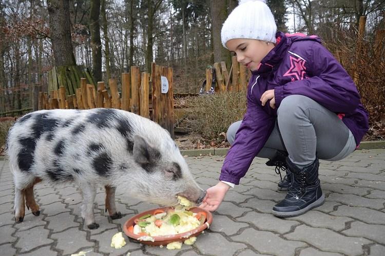 Zoo Děčín patří k nejkrásnějším zoologickým zahradám v Česku. Je rájem pro děti