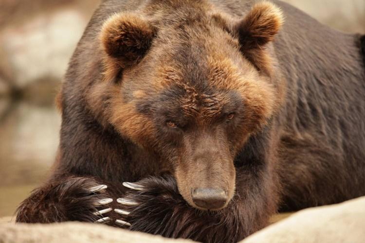 Zoo Brno představuje Ukradenou divočinu
