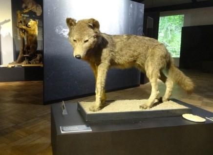 Výstava přibližuje, jak se měnil vztah člověka k lesu od středověku až po období industrializace