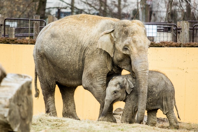 Děti si  1. června užijí Zoo Ostrava ještě více než jindy, je připraven speciální program