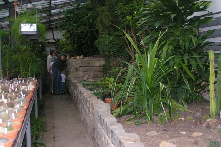 Klub kaktusářů si připravil výstavu v zámku Libochovice