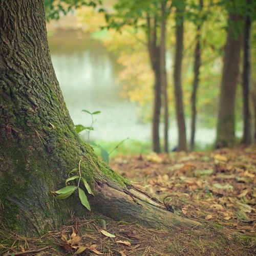 Úklid nýřanského lesa organizovaný spolkem DVOREK BOYS
