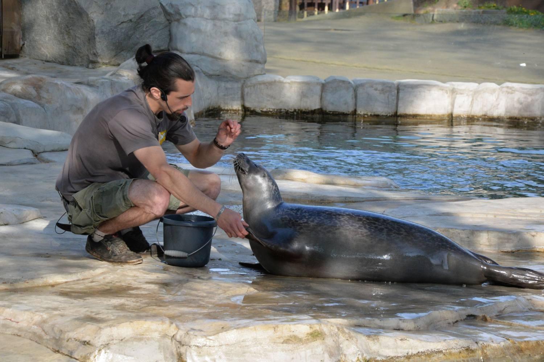 Raději pracuji se zvířaty než s lidmi, říká někdejší chovatel zoologické zahrady Lukáš Ševcovic