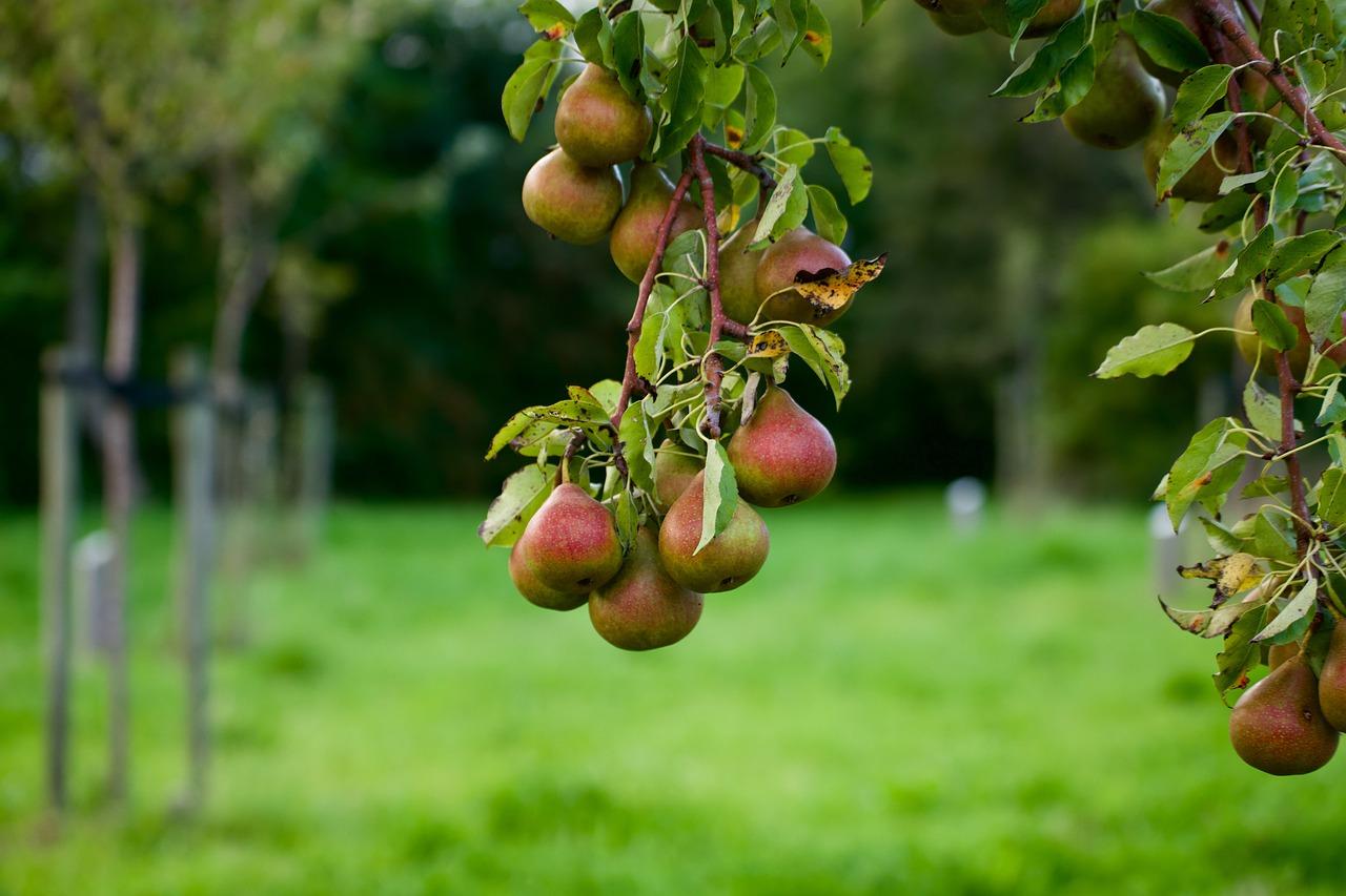 Frýdlant bude mít městský ovocný sad. Ovoce si do něj bude moci přijít utrhnout kdokoli