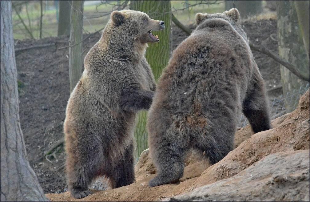 Znalci zvířat, pozor! V táborské zoo si můžete ověřit své znalosti ve vědomostní soutěži