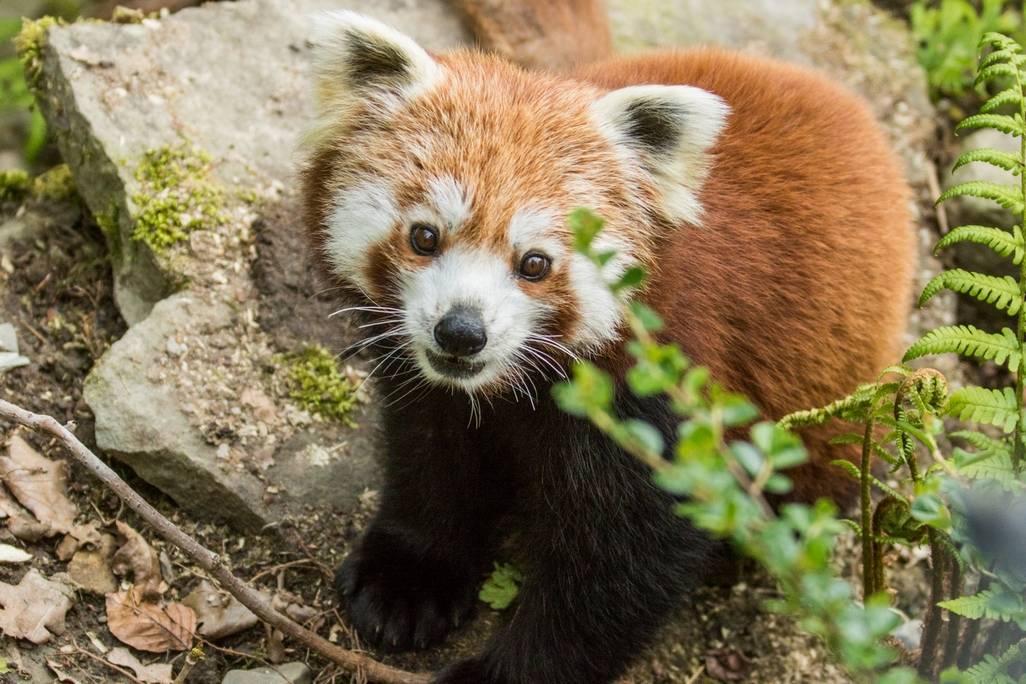 Jaký byl rok 2019 v Zoo Ostrava? Rekordní hned v několika ohledech
