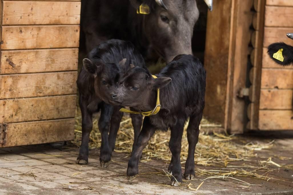 Vostravské zoologické zahradě se vloňském roce narodil rekordní počet mláďat