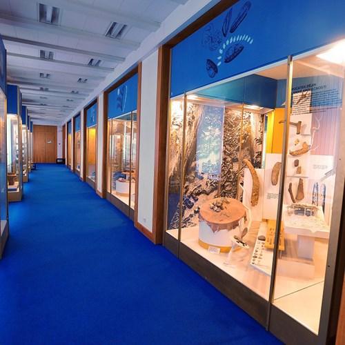 Moravské zemské muzeum - Dietrichsteinský palác