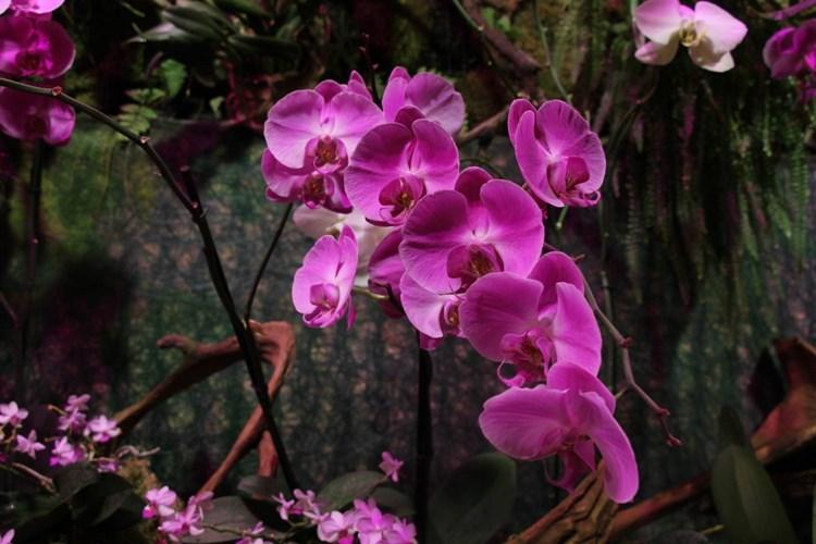 Tradiční výstava orchidejí, kaktusů, bromélií, sukulentů, jiných exotických rostlin a hmyzu včetně poradny pro pěstitele
