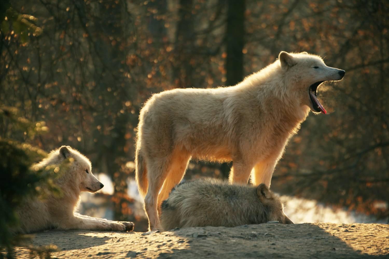 Brněnská zoo znovu překonala návštěvnický rekord