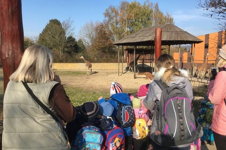Chystáte se o jarních prázdninách do dvorského safari parku? Můžete se těšit na komentované prohlídky