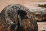 Prvními mláďaty letošního roku jsou v táborské zoo čiperní emu hnědí