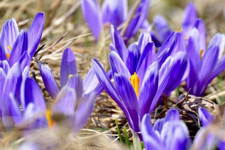 Vypravte se za přísně chráněnou rostlinou do Lačnova. Výlet můžete doplnit výšlapem k Lačnovským skalám