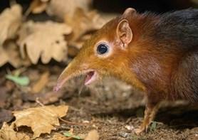 Vzácný bércoun petersův - Zoo Praha má nového obyvatele