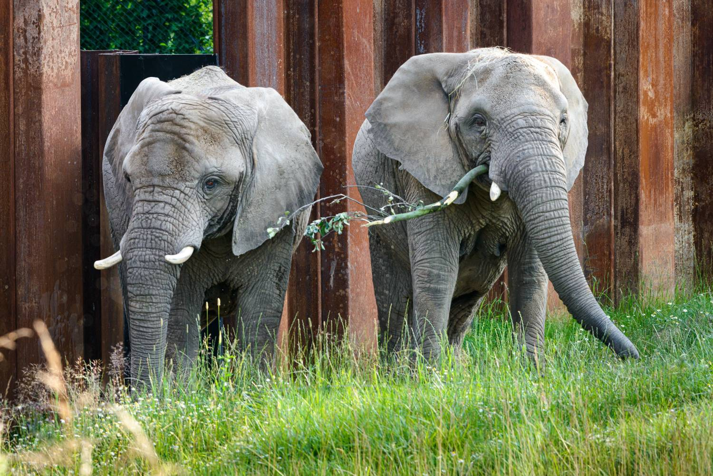 Do Zoo Zlín dorazil bílý slon. Aligátoři jsou zpět ve své letní expozici