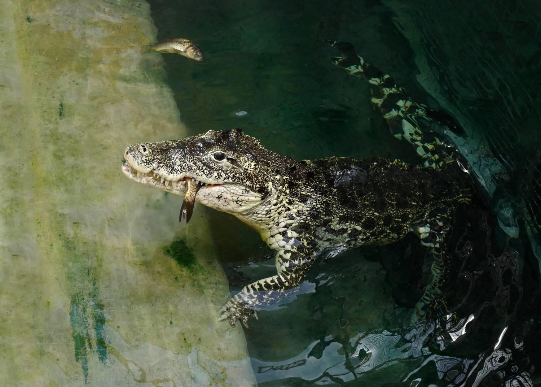 Exkluzivní setkání s extrémně nebezpečnými predátory. Takové mohou zažít návštěvníci pražské zoo