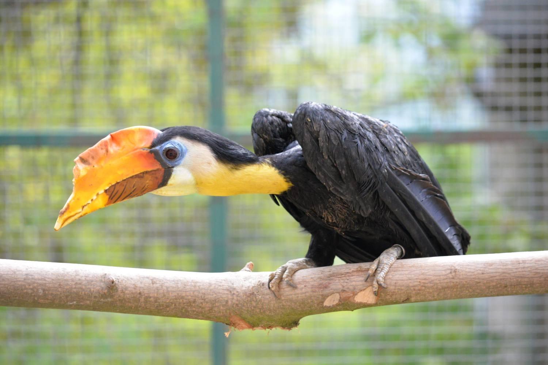 Ústecká zoo se může pyšnit dalším úspěšným odchovem. Páru zoborožců vrásčitých se vylíhla mláďata