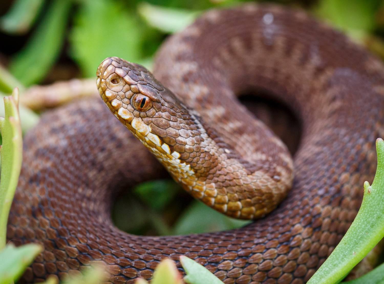 Další úspěšný odchov zmije obecné v Zoo Praha