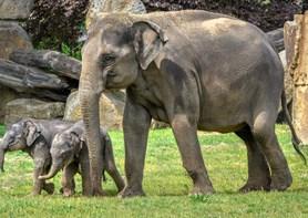 Oslavy Světového dne slonů v Zoo Praha i zmrzliny pro zvířata v horkých dnech